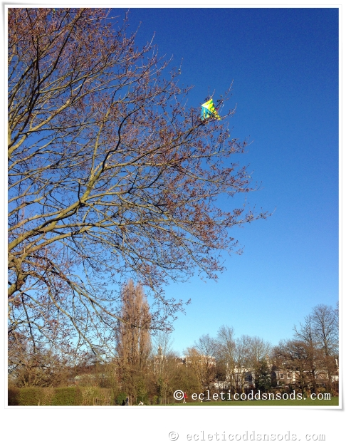 kite up tree