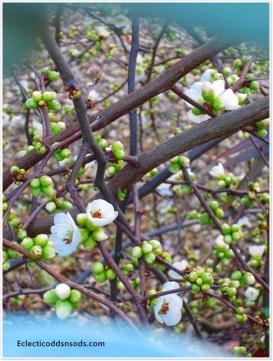 Budding & flowering