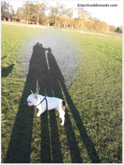 Me & my sons shadows being trampled by the dog!