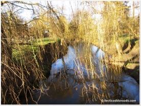 A swamp in Richmond Park