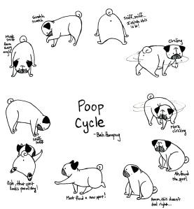 Poop Cycle