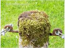 Moss, pretty hey?