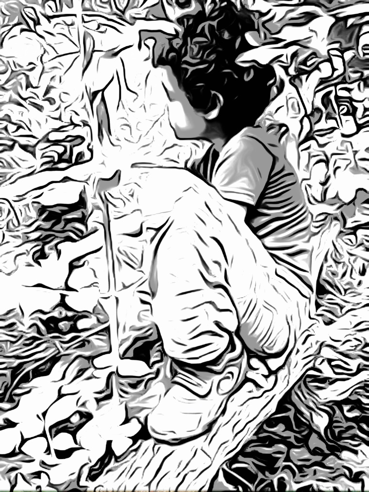 boy in tree, cartoon pencil drawing