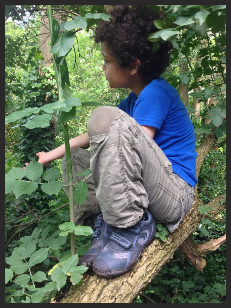boy in tree