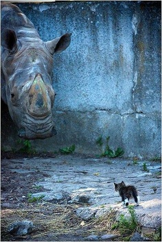 3D street art, rhino and cat
