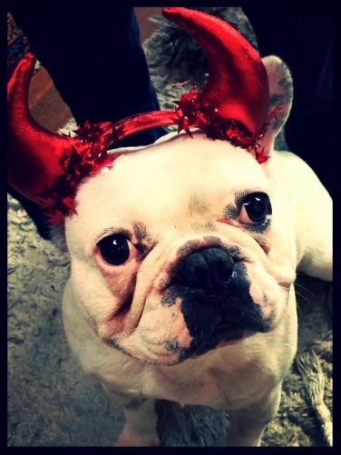 Halloween French Bulldog