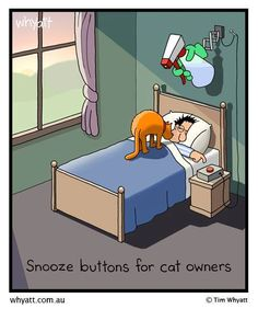 humour for cat lovers