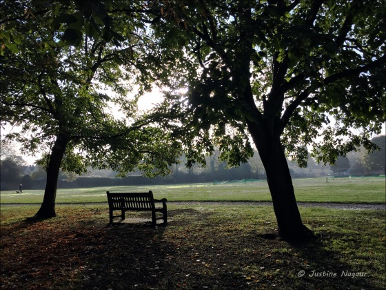 The Common early morning
