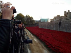 The many visitors connecting at the Tower of Londons Poppy Display