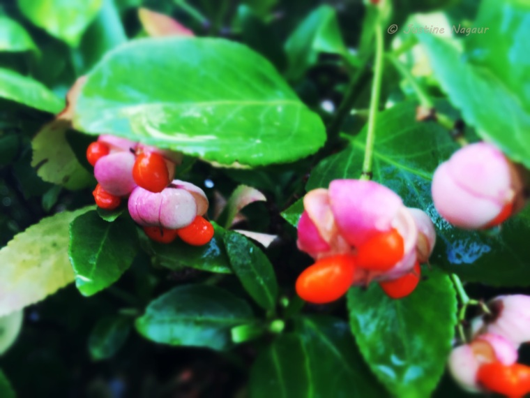 Orange and pink berries