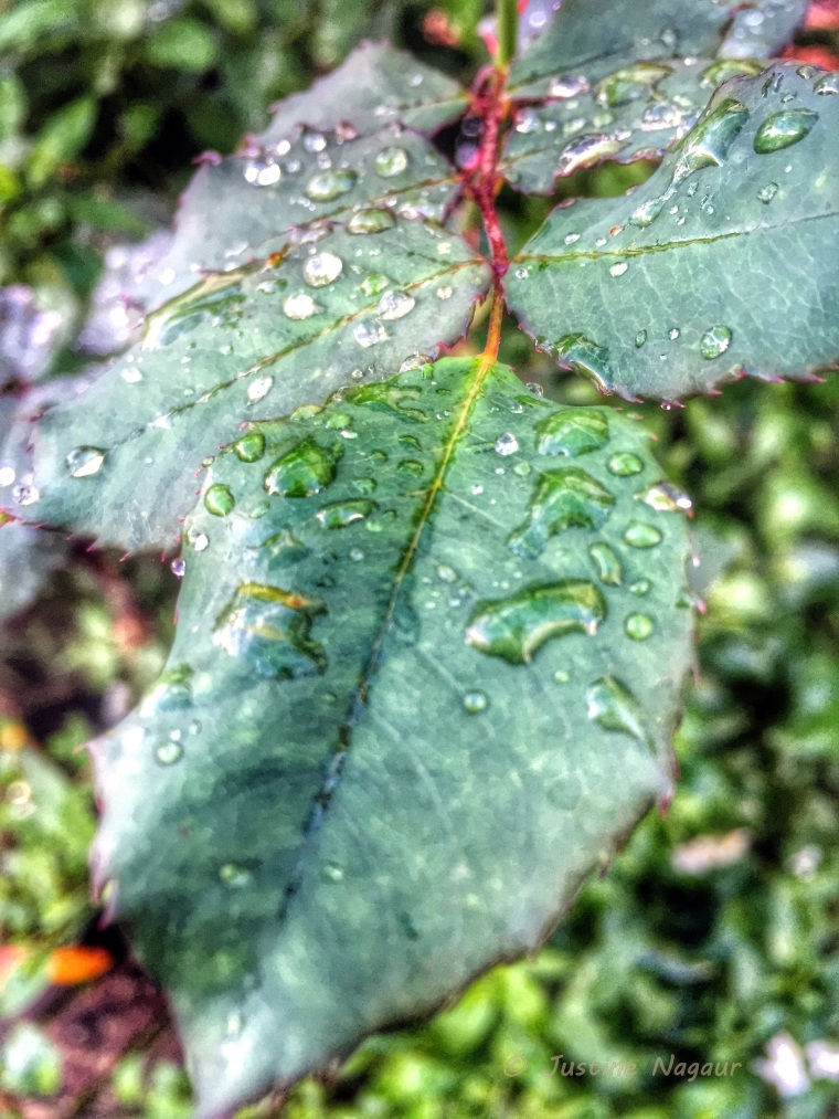 water droplets upon a leaf