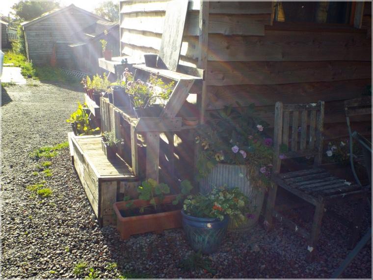 suns rays across plants