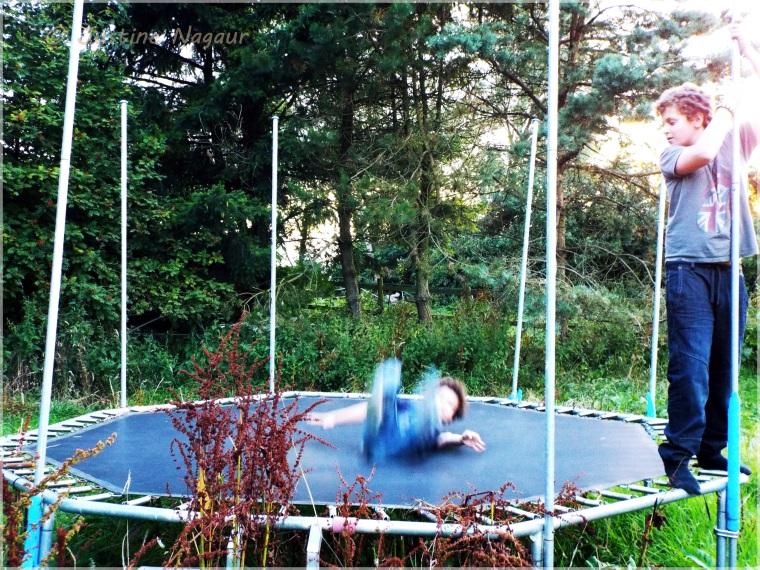 boys trampolining