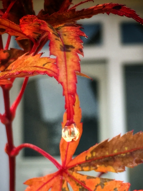 Droplet of rain