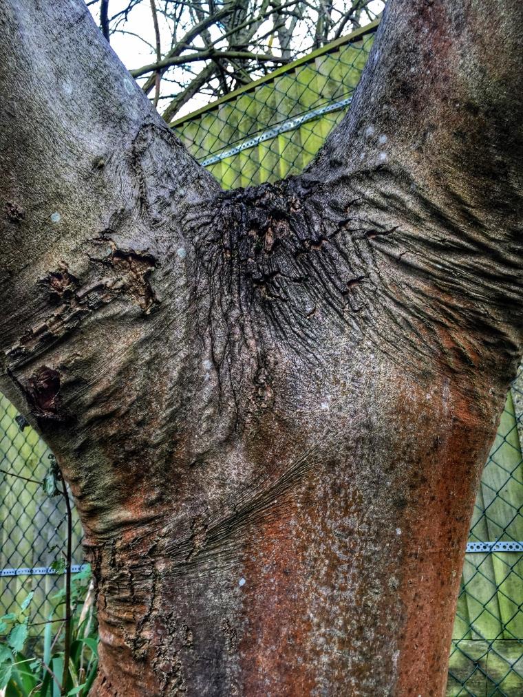 The Vagina Tree