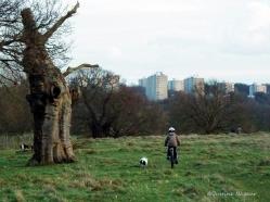 Urban versus Rural