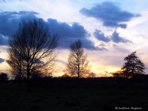 Majestic trees make their presence known to the sunset