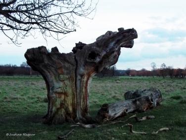 The favourite tree