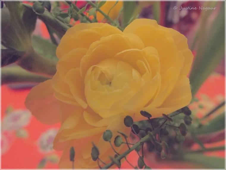Macro Monday: buttery petals