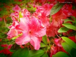 The Changing Seasons #5 May