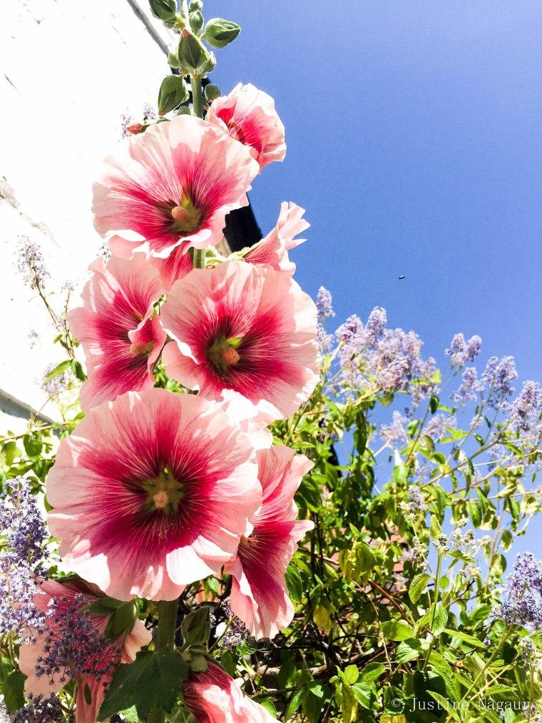 Happy Monday Flowers
