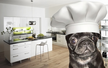 pug in chefs hat