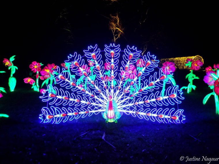 kew-light-show-2015