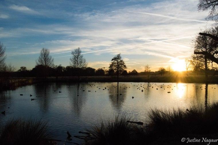 Richmond Park sunset